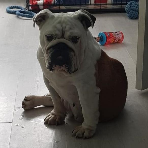 Pandora – Now Adopted