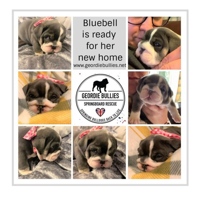 Bluebell – Now Adopted!