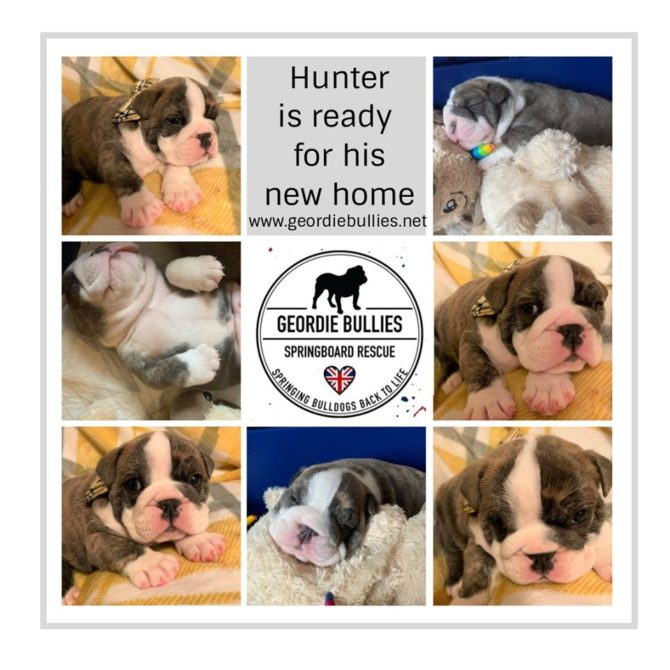Hunter – Now Adopted!