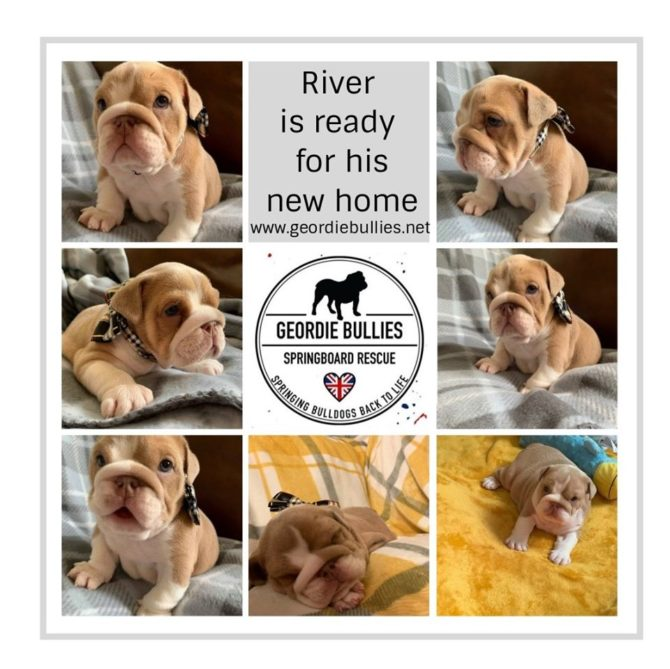 River – Now Adopted!