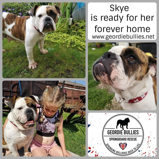 Skye – Now Adopted!