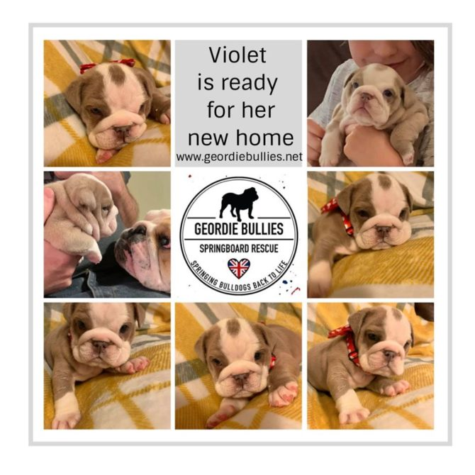 Violet – Now Adopted!