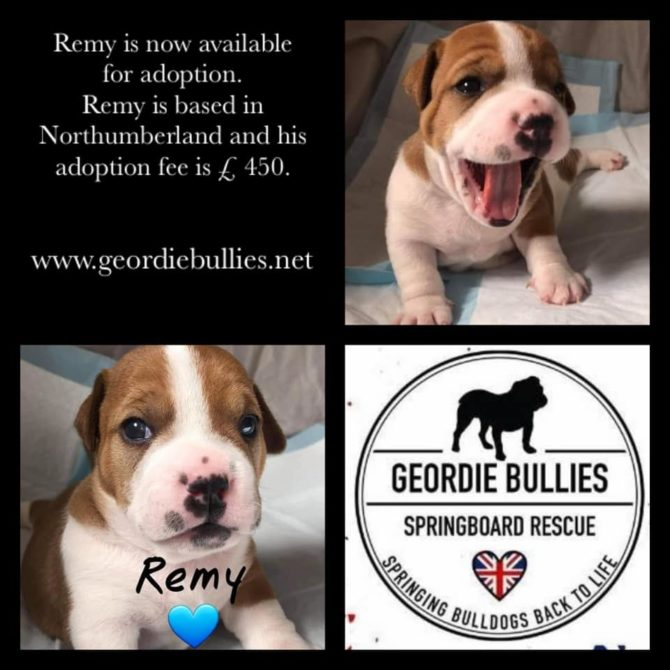 Remy – Now Adopted