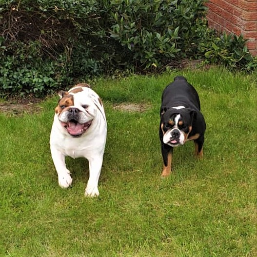 Bella & Mr Beefy – Now Adopted