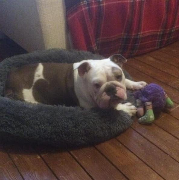 Winston AKA Winnie – Now Adopted