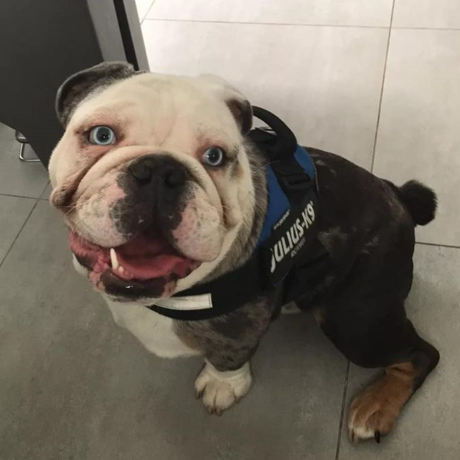 Zeus – Now Adopted