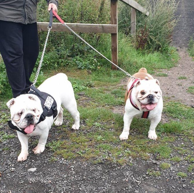 Lola & Boris – In Foster – North East